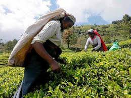 दिवाली से पहले चाय के दाम में आएगा उबाल