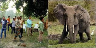 हरिद्वार : हाथी ने महिला और किसान को कुचला, दोनों की मौत